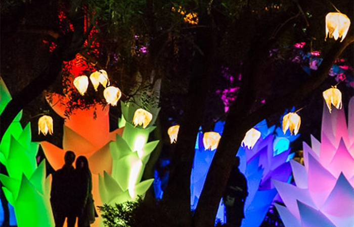 Astro Botanicals Garden Of Light At Night